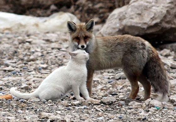 عکس دوستی حیوانات وحشی با اهلی