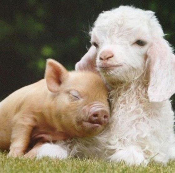 عکس حیوانات برای پروفایل واتساپ