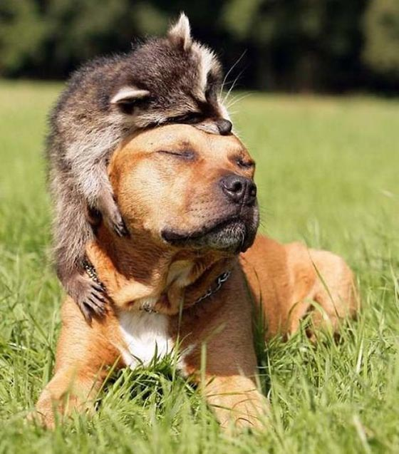 عکس پروفایل حیوانات گوگولی