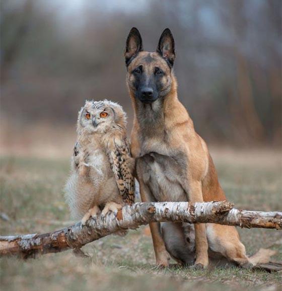عکس پروفایل دوستی حیوانات