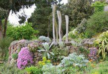دانستنی ها درباره گیاهان