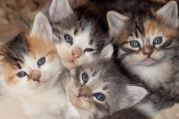 دانستنی ها در مورد گربه ها