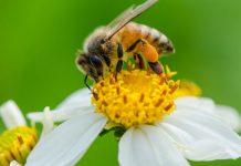 انشا درباره صدای زنبور عسل