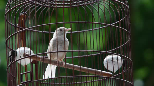 انشا از زبان یک پرنده در قفس