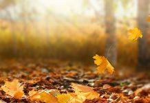 انشا درباره فصل پاییز