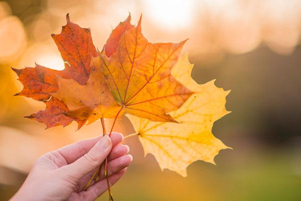 تصاویر برگ های پاییزی