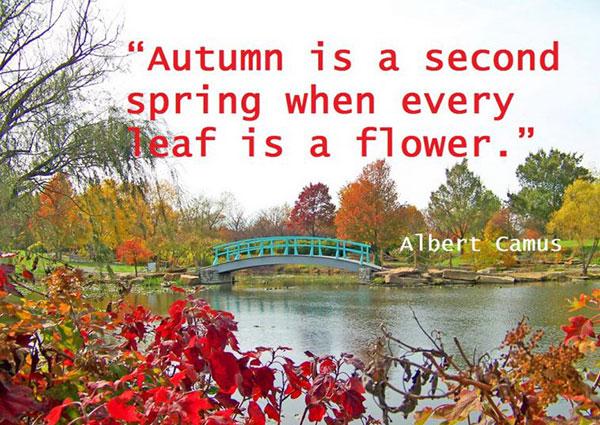 عکس نوشته انگلیسی درباره پاییز