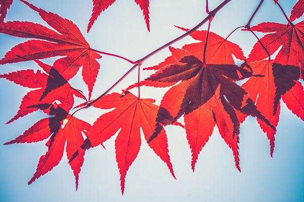 تصاویر پاییزی کیفیت بالا