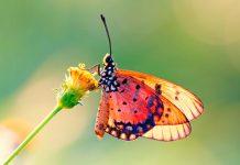 تصاویر گل و پروانه زیبا