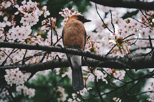 زیباتربن تصاویر گل و بلبل