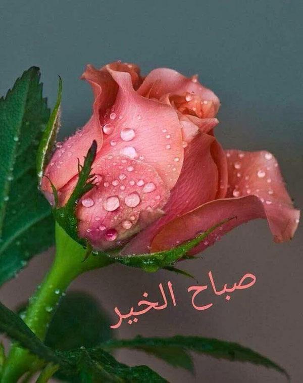 عکس نوشته صبح بخیر عربی