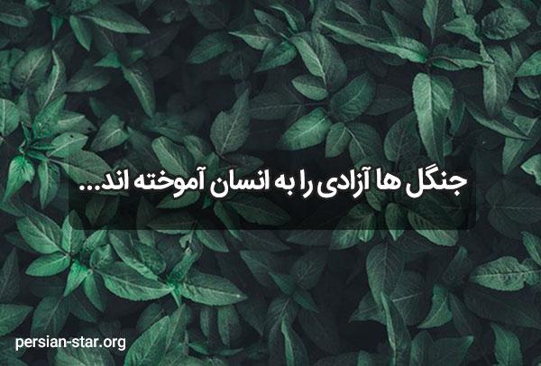 عکس نوشته درخت و جنگل