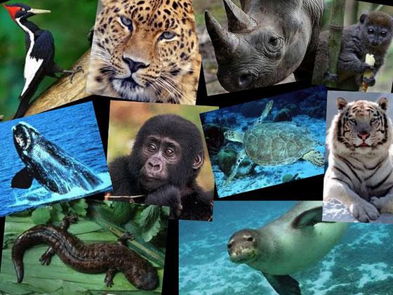 نشا درباره حیوانات در حال انقراض
