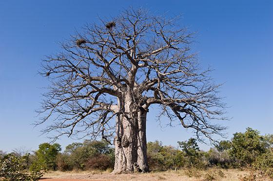 انشا در مورد اگر من یک درخت بودم