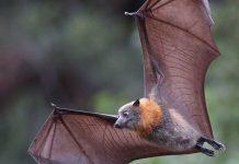 دانشتنی های جالب و زیبا در مورد خفاش ها