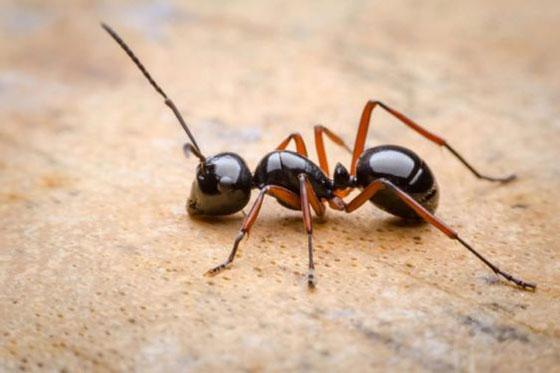 دانستنی های جالب و شگفت انگیز درباره مورچه ها