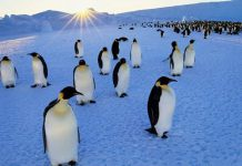 دانستنی و حقایق جالب درباره پنگوئن ها