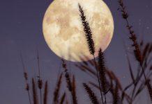 انشا با موضوع با ماه نشینی ماه شوی، با دیگ نشینی سیاه شوی