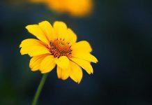 انشا درباره گل از نگاه باغبان