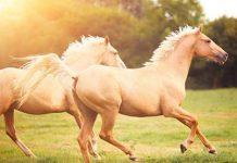 دانستنی ها و حقایق جالب درباره اسب ها