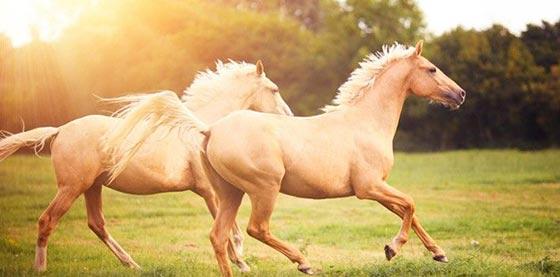 دانستنی های جالب و خواندنی در مورد اسب ها