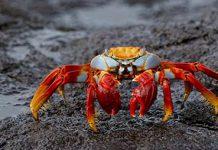 دانستنی ها و حقایق جالب درباره خرچنگ ها