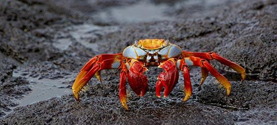 35 دانستنی جالب و خواندنی درباره خرچنگ ها