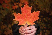 عکس برگ پاییزی برای تصویر زمینه
